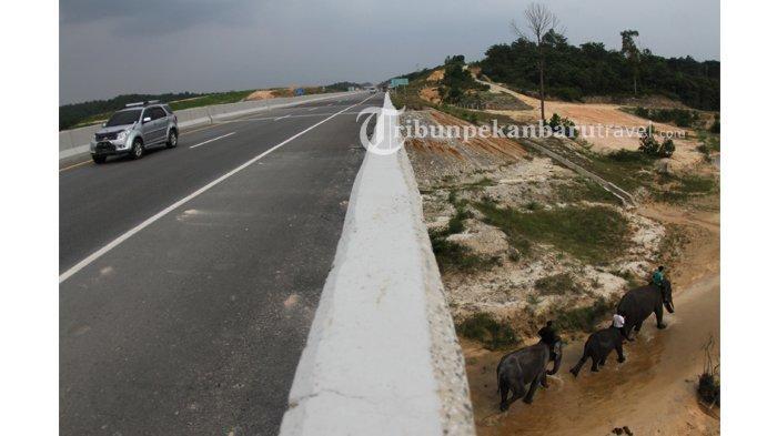 FOTO : Underpass Perlintasan Gajah di Jalan Tol Pekanbaru-Dumai - perlintasan-gajah-di-jalan-tol-pekanbaru-dumai1.jpg