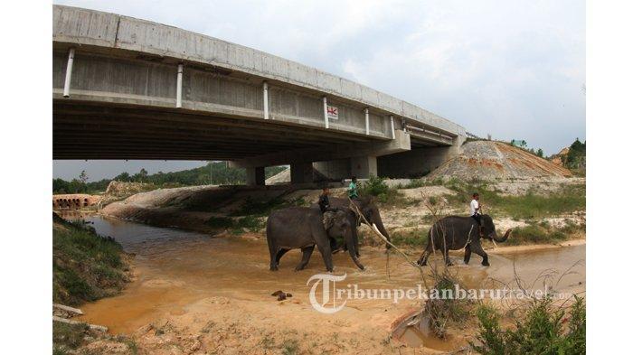 FOTO : Underpass Perlintasan Gajah di Jalan Tol Pekanbaru-Dumai - underpass-perlintasan-gajah-di-jalan-tol-pekanbaru-dumai2.jpg