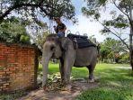 gajah-ini-adalah-satwa-penghuni-kasang-kulim-zoo-kabupaten-kampar.jpg