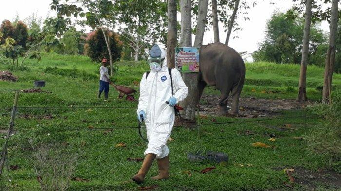 balai-besar-ksda-riau-semprot-disinfektan-di-kebun-binatang-kasang-kulim.jpg