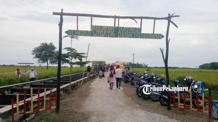 Gerbang Selamat datang di kawasan Agrowisata Desa Mentayan