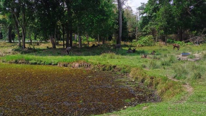 Ada Taman Rusa di Siak Riau