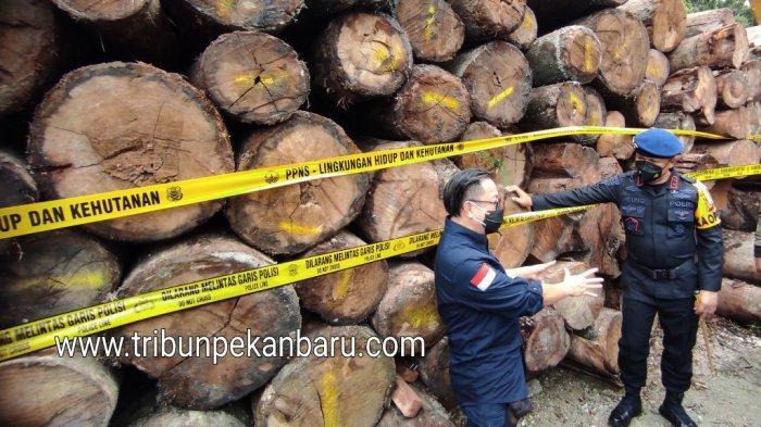 Kayu gelondongan yang berhasil diamankan dari sejumlah tempat pengolahan kayu ilegal oleh Personil KLHK dan Polda Riau. (tribunpekanbaru.com/ Doddy Vladimir)