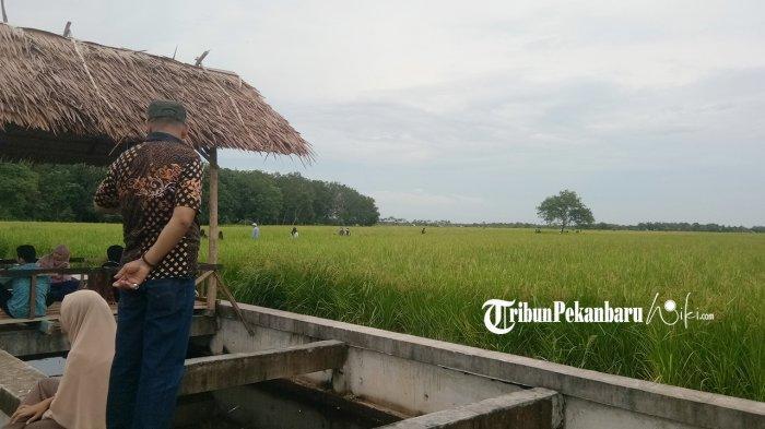 Pengunjung menikmati keindahan persawahan di Agrowista Desa Mentayan. tribunpekanbaruwiki.com/Muhammad Natsir