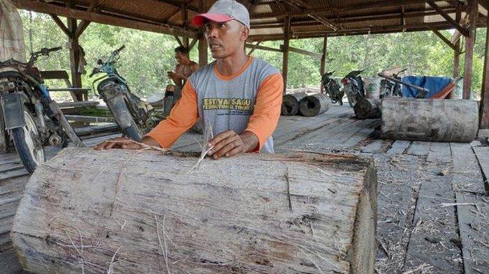 Perjuangan Petani Sagu Kepulauan Meranti Riau Ditengah Pandemi Covid-19
