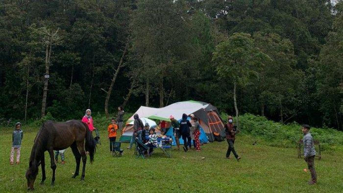 Area camping di Jungle Milk Lembang dengan kuda-kuda yang berkeliaran di sekitarnya.