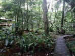 tanaman-di-arboretum-sylva.jpg