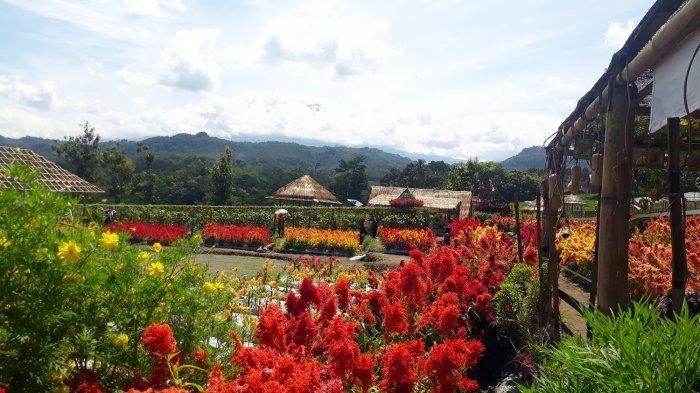 Agro Rumpun Ijo Karanganyar, Taman Bunga Warna Warni yang Instagramable