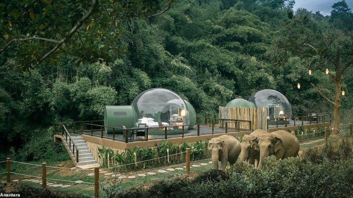 Hotel di Thailand Ini Tawarkan Sensasi Menginap di Habitat Asli Gajah