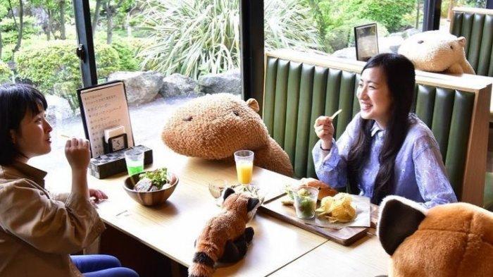 Unik! Kafe Kebun Binatang di Jepang Gunakan Boneka Kapibara Sebagai Penanda Jaga Jarak