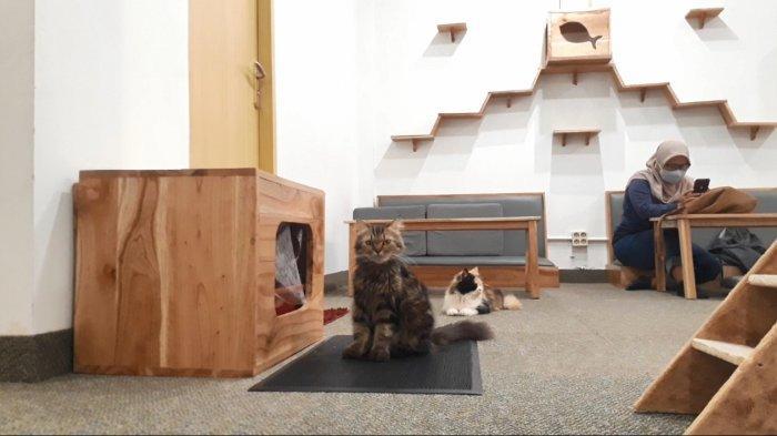 Kucing kucing di Paw Paw Café Solo
