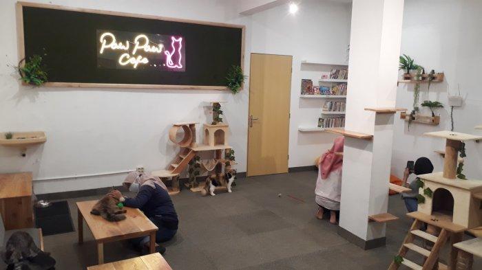 Bermain Dengan Kucing Lucu di Café Kucing Pertama Kota Solo, Paw Paw Café