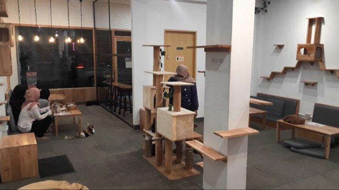 Paw Paw Café Targetkan Pengunjung dari Pecinta Kucing Kota Solo