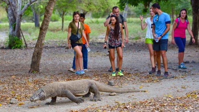 New Normal, Wisata Taman Nasional Komodo Siap Dibuka dengan Pembatasan Pengunjung