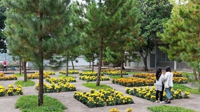 Rumah Atsiri Indonesia, Lokasi Wisata Asik di Karanganyar Yang Dipenuhi Warna-Warni Bunga