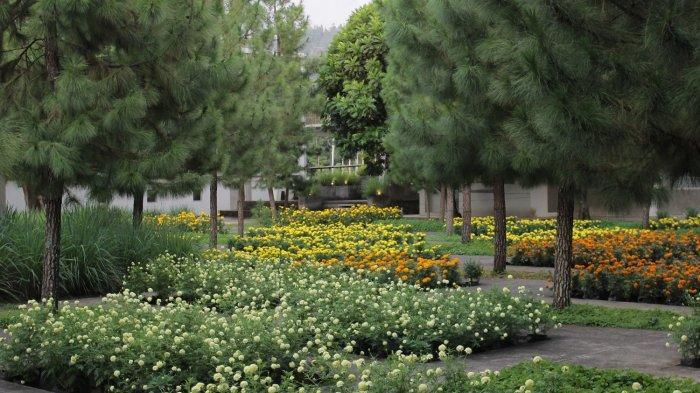 Berbagai jenis tanaman herbal di Rumah Atsiri
