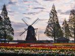 bunga-tulip-di-prefektur-chiba-jepang-timur-yess.jpg