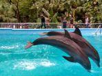 dolphin-bay-wahana-baru-di-ocean-dream-samudra-yoss.jpg