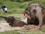 thailand-gajah.jpg