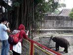 tstj-jurug-solo-satwa-gajah.jpg