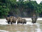 Daftar 7 Taman Nasional di Indonesia yang Masuk Situs Warisan UNESCO