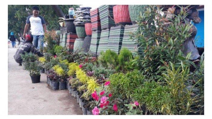 Lima Depot Penjual Tanaman Hias Di Palembang Tribunsumsel Wiki