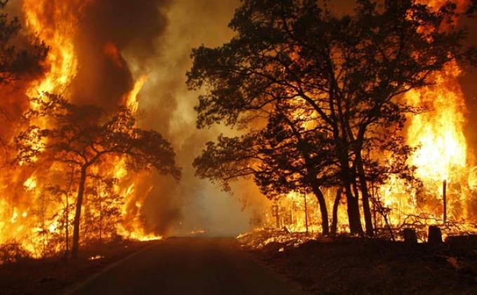 Teten Laporkan Polisi SP3 Kasus Kebakaran Hutan