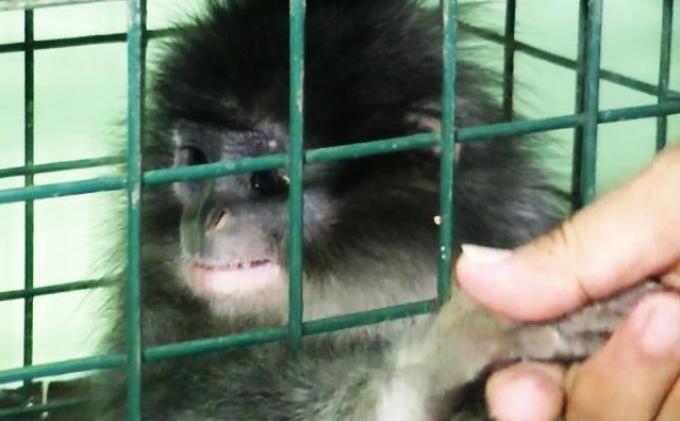 Mabes Polri Endus Sindikat Penjual Hewan Langka di Palembang