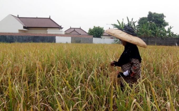 Puluhan Hektar Lahan Pertanian Beralih Fungsi, HKTI Ingatkan Kepala Daerah Lindungi Lahan Pertanian