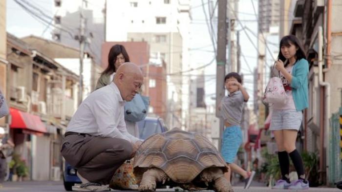 Kura-kura Raksasa Setia Menemani Majikannya di Jepang