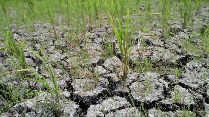 Bogor Wilayah Timur Masih Kekeringan dan Perlu Bantuan Air Bersih