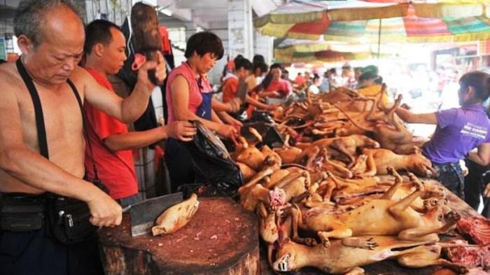 Sudin KPKP Jakarta Pusat akan Telusuri Sumber Pemasok Daging Anjing di Pasar Senen