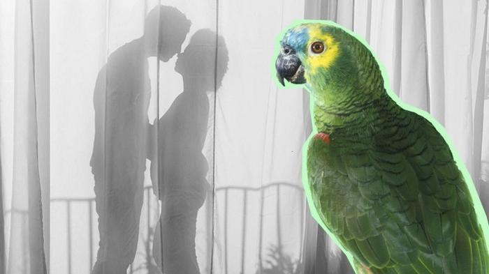 Wow, Burung Kakaktua Ini Bongkar Perselingkuhan Suami dan Pembantu