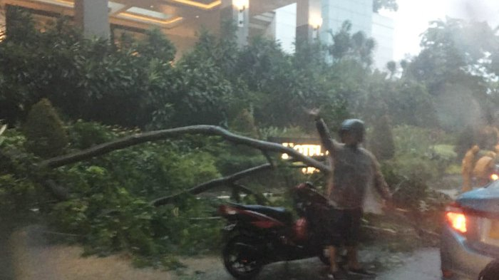 Hujan Disertai Angin Kencang Bikin Pohon di Depan Hotel Mulia Tumbang