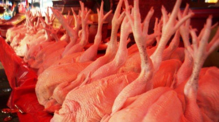Ilustrasi daging ayam.