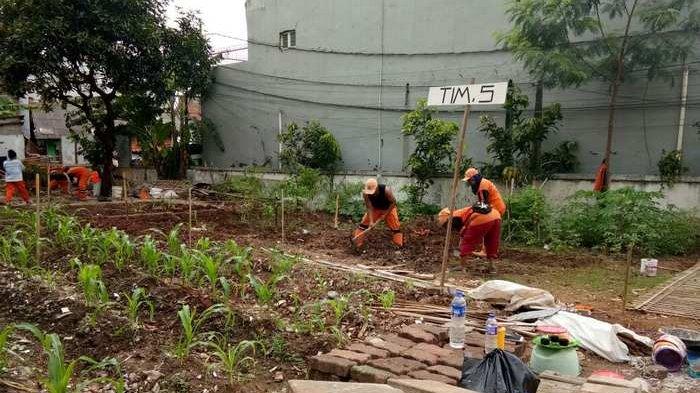 Warga Manfaatkan Lahan Kosong untuk Berkebun - Warta Kota