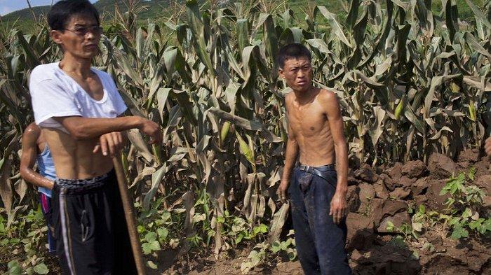 Kondisi Kelaparan dan Kekurangan Bahan Makanan, Rakyat Korea Utara Diminta Makan Kura-kura Air Tawar