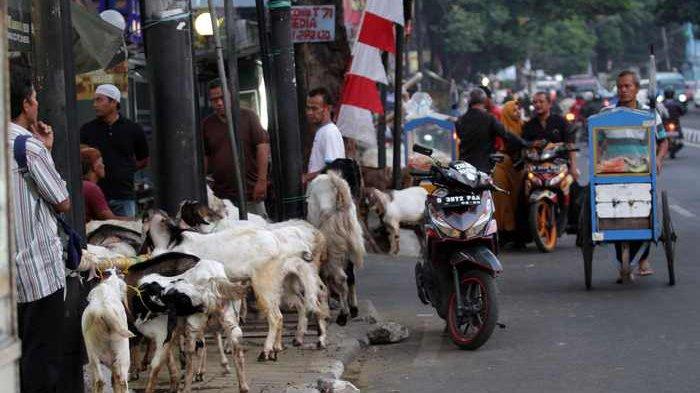 Jualan Hewan di Trotoar, Pedagang Ogah Pindah Kecuali Dicarikan Tempat Ramai dan Untung Rp 10 Juta