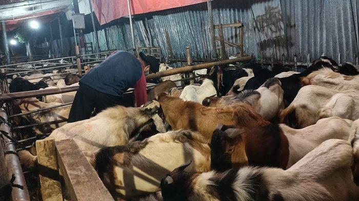 Kurban Wajib Hewan Ternak Tak Boleh Digantikan Uang dan Barang, Ini Penjelasannya