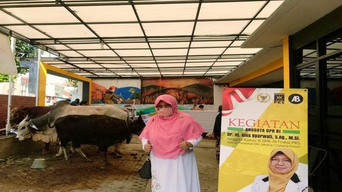 Teladani Keluarga Nabi Ibrahim, Legislator Anis Byarwati Kurban 23 Kambing Boer dan 4 Sapi