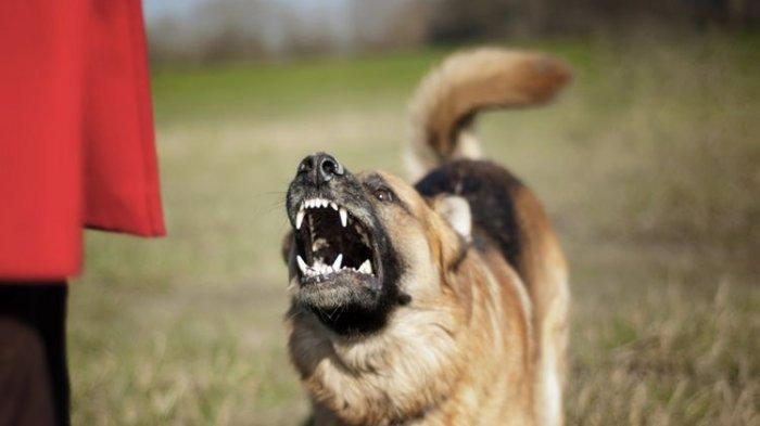 Pemilik Anjing yang Terkam ART Hingga Tewas Sempat Minta untuk Lakukan Observasi