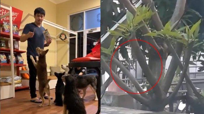 Polisi Tindak Lanjuti Kasus WNA Nigeria Aniaya Anjing di Tangerang, Anjing Berhasil Diselamatkan