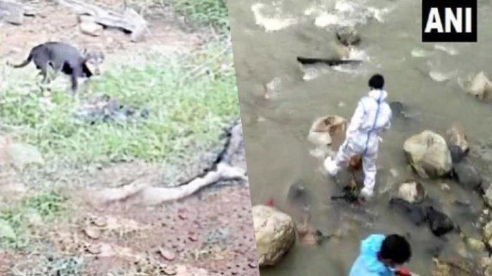 Covid-19 di India: Jenazah Pasien yang Hanyut di Sungai