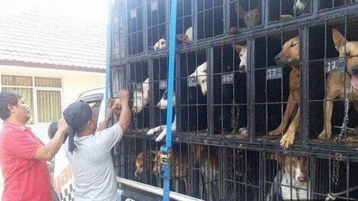 Bisnis Anjing Pemburu Babi Hutan Dikirim Ke Sumatera Harga Seekor Bisa Mencapai Rp 15 Juta Warta Kota