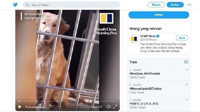 Anjing Malang Terkunci Hampir Sepekan di Kandang, Pemilik Tertahan di Wuhan Akibat Virus Corona