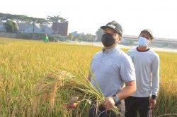 Arief R. Wismansyah Apresiasi KWT Barokah Kampung Sukun yang Tetap Produktif di Masa Pandemi