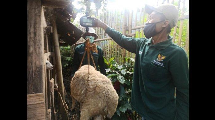 Program Kurban Online Baznas Dorong Peningkatan Omzet Peternak Mustahik di Garut