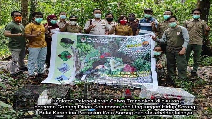 BBKSDA Papua Barat Gelar Pelepasliaran 15 Individu Satwa Liar di Taman Wisata Alam Sorong