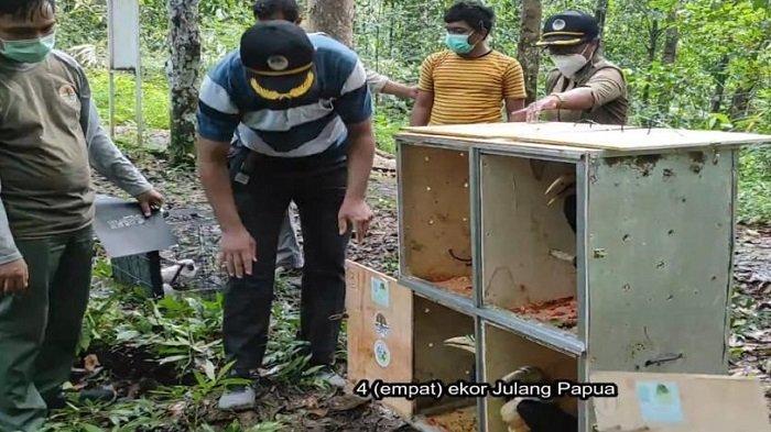 Balai Besar Konservasi Sumber Daya Alam (BBKSDA) Papua Barat melaksanakan pelepasliaran 15 individu satwa burung Papua ke habitat alaminya, di Taman Wisata Alam Sorong, Kota Sorong, Papua Barat, Selasa (13/7/2021).