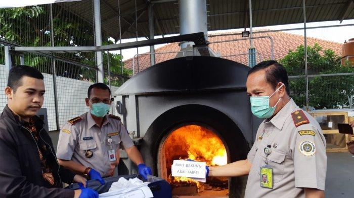 Benih Sayuran Impor Hingga Telur Ayam Turki Dibakar di Bandara Soekarno Hatta Karena Ilegal